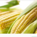 玉米的功效与